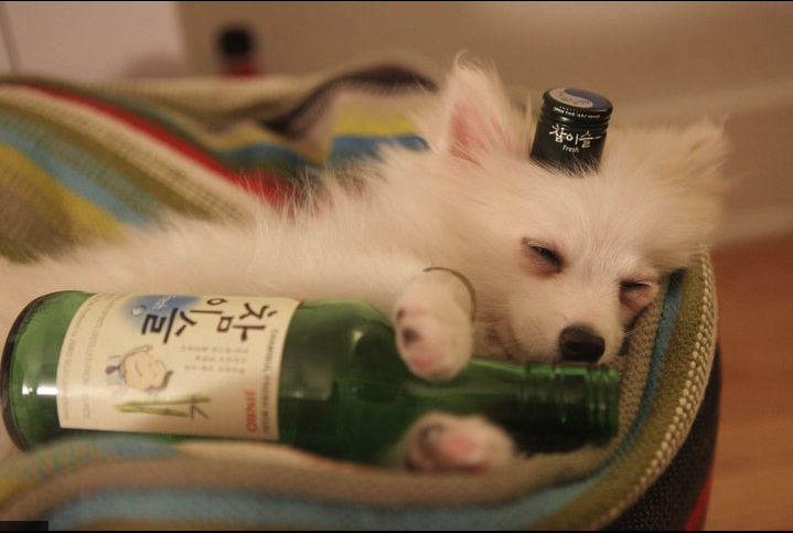 Adorable Hangover